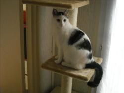 Donnie, chat Gouttière