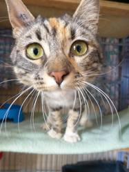 Dora, chat Gouttière