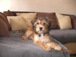 Doriane, chien