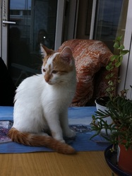 Doucette, chat