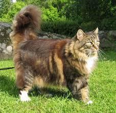 Doucette, chat Gouttière