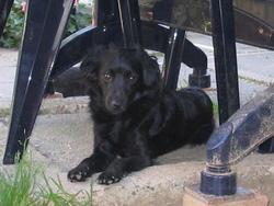 Douchka, chien