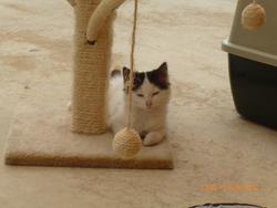 Douchka , chat Gouttière