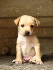 Doudou, chien