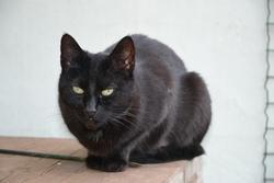 Doudouche, chat Gouttière
