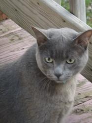 Doudoune, chat Gouttière