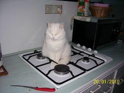 Doudounette, chat