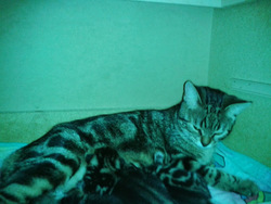 Doudounne , chat