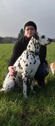 Dough, chien Dalmatien