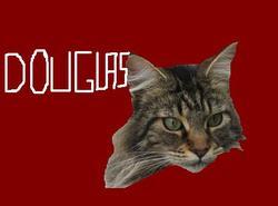 Douglas, chat Maine Coon