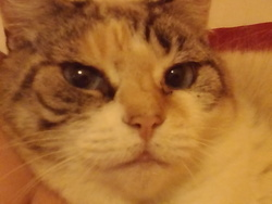 Douna, chat Gouttière