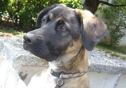 Doushka, chien