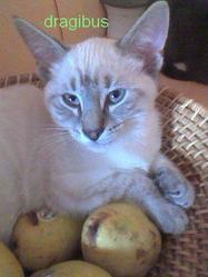 Dragibus, chat