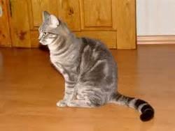 Duche, chat