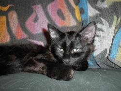 Duchésse, chat