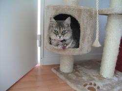 Duchesse, chat Gouttière