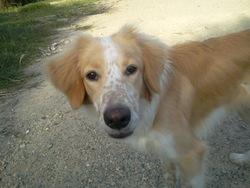 Duff, chien Border Collie
