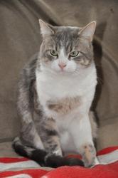 Duke, chat Gouttière