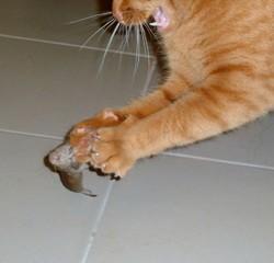 Dulcey Décédé, chat Gouttière