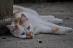 Dustin, chat Gouttière