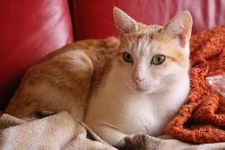Dyna, chat Gouttière
