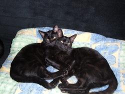 Dzin Et Minette, chat