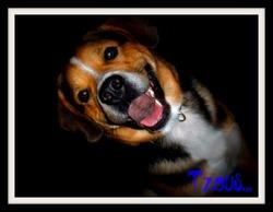 Tzeus, chien
