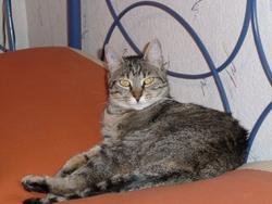 Cristal, chat Gouttière