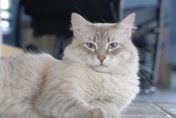 Mojo, chat Gouttière