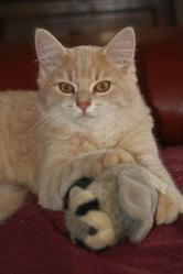 Eliot, chat Gouttière