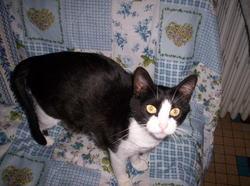 Domi, chat Gouttière
