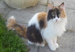 Juneth, chat Gouttière