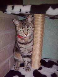 Dima, chat Gouttière