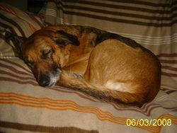 Pinuts, chien