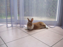 Dory, rongeur Lapin