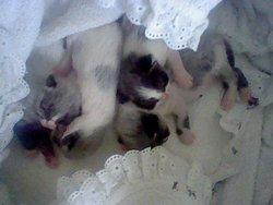 Les Bébés De Zora, chat