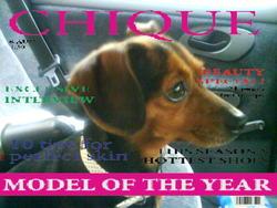 Nina, chien Teckel