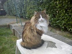 Galhen, chat Gouttière