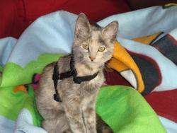 Fiby, chat Gouttière