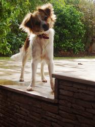 Joy, chien