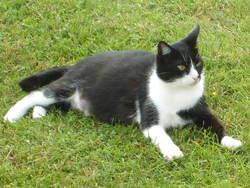 Moumouss, chat Gouttière