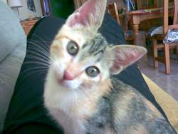 Paki, chat Gouttière