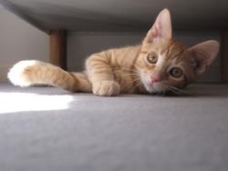 Fredel, chat Gouttière