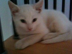Coco, chat