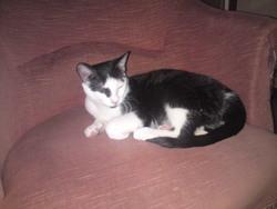 Otello, chat Gouttière