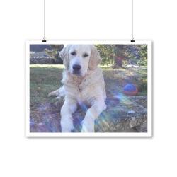 Earwen, chien Golden Retriever