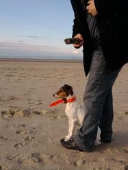 Eastwood, chien Jack Russell Terrier