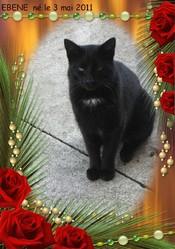 Ebene, chat Gouttière