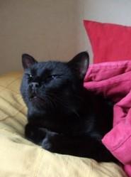 Ebène, chat Gouttière