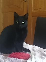 Ebony, chat